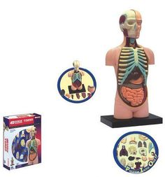 learn about the body. rmb85