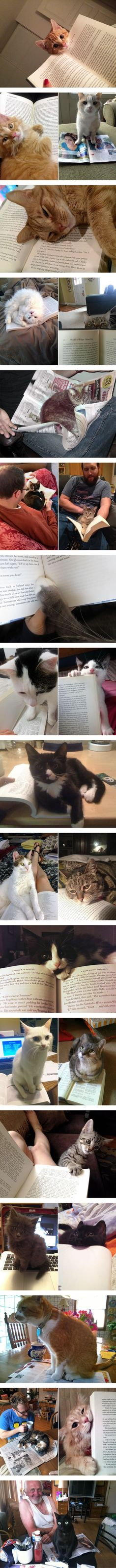Cats won't let you read