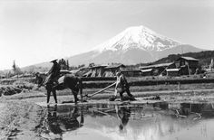 "A farmer ploughs rice fields under Mount Fujiyama, ""The Gate Of Heaven"" in Japan. The mountain will provide the water necessary for the crop, 1950"