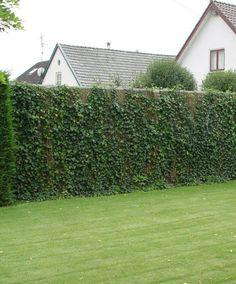 Een schutting of draadscherm in de tuin kun je makkelijk in het groen zetten.