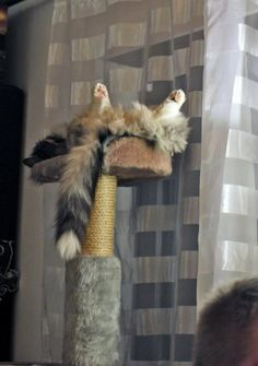 My Tomcat Oskar knows how to chill! Nadine Fraunholz