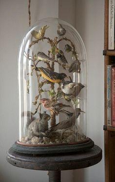 Antique birds under glass
