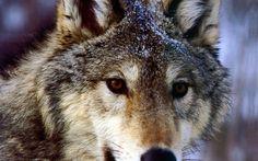 Download Wallpaper ID 501286 - Desktop Nexus Animals