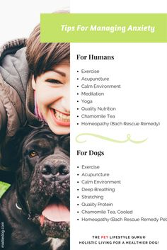 tips to help soothe your dogs anxiety by rebecca sanchez the pet lifestyle guru at mattiedog