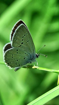 Butterfly ღGreen Lovinღ
