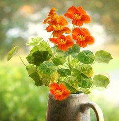 Nasturtium - I just planted a bunch of these in my container garden. They ward off bugs, are edible, and look fabulous. What's not to love?!