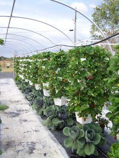 vertigro, these are the pots we have in our back yard...great space saver..beautiful produce