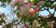 Frühlingslüfterl und Maiglöcklerduft  #Frühling in den #Landlust-Ferienhäusern in der #Steiermark!