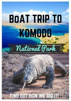 Would you survive 5 days on the boat just to see Komodo dragons? http://www.adventureinyou.com/komodo-boat-trip-review-lombok-to-flores/