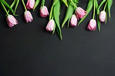 Tulips on Black Styled Desktop Graphics This purchase includes one high resolution web-sized horizontal digital image of a styled matte blac by The Ginger Snaps Co 1440x2560 Wallpaper, Wallpaper Backgrounds, Pink Tulips, Tulips Flowers, Tulips Images, Tulip Painting, Black Desktop, Background Powerpoint, Light Texture