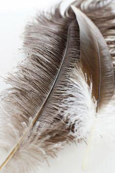 feather soft.  texture soft fluffy natural free light materials #jotitdown