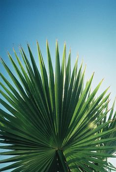 Pinned by Marion Courtois Tropical Vibes, Tropical Plants, Summer Vibes, Palm Trees, Landscape Design, Planting Flowers, Greenery, Plant Leaves, Beautiful Pictures