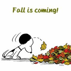 Snoopy ❤ Fall is coming