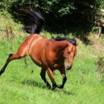 Stumbles and Missteps: What's Causing Your Horse's Clumsiness?