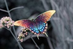 What can I say, I love butterflies