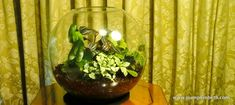 I planted this glass terrarium especially for the readers of October 2018 edition of Vantage Point Magazine. This is a simple glass globe, planted with some attractive, but easy to find terrarium plants. You can see all of the plants that I used for this… Indoor Ferns, Indoor Plants, Terrarium Plants, Glass Terrarium, Variegated Plants, Bottle Garden, Glass Globe, Air Plants, Planting