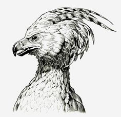 Art Drawings Sketches Pencil Harry Potter 47 Ideas For 2019 Harry Potter Tattoos, Harry Potter Sketch, Harry Potter Drawings, Art Drawings Sketches, Bird Drawings, Drawing Art, Pheonix Drawing, Phoenix Bird Tattoos, Teen Titans Raven