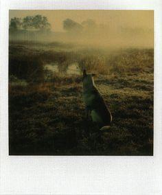 Tarkovsky Polaroids.