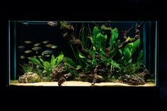 How to set up a simple – but stunning – planted tank