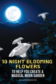 10 night blooming flowers to help you create a magical lunar garden - Diygarden.live - 10 night blooming flowers to help you create a magical lunar garden - Night Blooming Flowers, Night Flowers, Spring Flowers, Garden Shrubs, Shade Garden, Glow Garden, Rockery Garden, Xeriscaping, Garden Pond