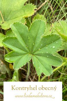 Plant Leaves, Garden, Plants, Garten, Lawn And Garden, Gardens, Plant, Gardening, Outdoor