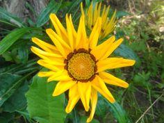 Flower nature 2k17