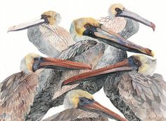 Brown Pelicans  Archival Print by unitedthread on Etsy, $20.00
