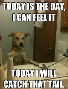 25 funny dog memes that feature a picture of a pooch and a funny caption written by a human. #DogHumor #funnydogs