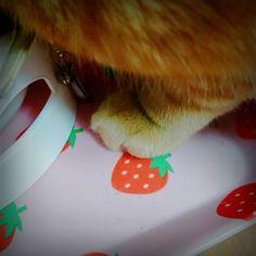 お疲れさま  #ねこ #猫 #ぬこ #cat #catlover #instacat #kitty #茶トラ #小黄 #ねこちゃん#ねこちん #にゃんこ #고양이 #mèo #야옹 #야옹이  #ちゃきん #ちゃきんずし #ChakinZushi #モフモフ #hbd  風船が飛んどる(ᆺ)