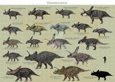 Chasmosaurinae by PaleoGuy on DeviantArt