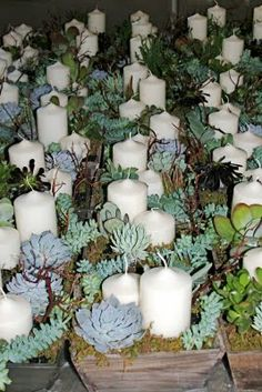 Diary of a designer: :: Succulent centerpieces - Succulents diy Succulents Drawing, Colorful Succulents, Hanging Succulents, Succulents Diy, Growing Succulents, Succulent Wedding Centerpieces, Candle Centerpieces, Candles, Centerpiece Ideas