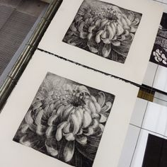 Test. Etching on copper plate. Chrysanthemum