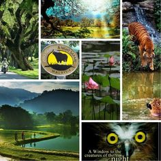 Zoo Taiping Malaysia Truly Asia, Taiping, Travel, Viajes, Destinations, Traveling, Trips