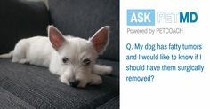 Today's #AskPetMD answer addresses fatty tumor in dogs! Have a question only a veterinarian can answer?