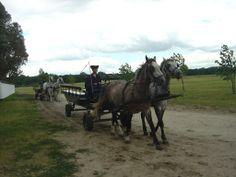 Bugac Puszta National Park - Carriage ride through the Puszta Hungary, National Parks, Horses, Animals, Animales, Animaux, Animal, Animais, Horse