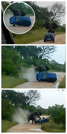 OMG! Watch as a crazy elephant attacks and flips a car at Kruger National Park in South Africa. #spon #video