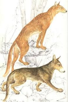 Every dog on earth likely descended from a species knows as the Tomarctus - a creature that roamed the earth over 15 million years ago. http://thepoophappens.com