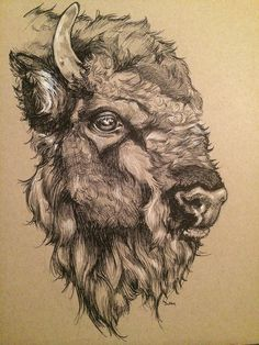 Image result for buffalo head drawing