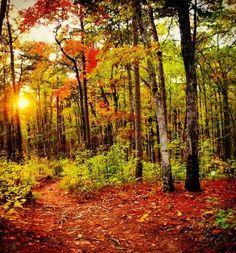 Talladega National Park in Alabama, USA