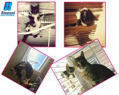 #віконнісистеми #пятниця #котики #funnycats #lovecats #домашніулюбленці #віконнийдекор #жалюзі #вікнальвів Невже це ПЯТНИЦЯаааа ???? Тиждень минув! Усім гарного робочого дня та чудових і яскравих вихідних! п.с. І для чудового настрою - трішки веселих моментів з життя наших домашніх улюбленців
