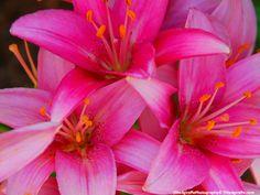 Flower Photographic