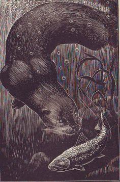 C. Tunnicliffe illustration from Tarka the Otter