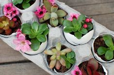 Spring plant fashion - 5 creative potting solutions.