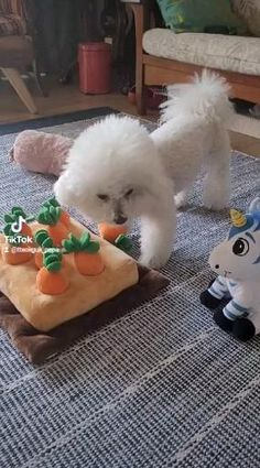 Cortes Poodle, Memes, Dogs, Girl Rooms, Funny Animals, Meme, Pet Dogs, Doggies