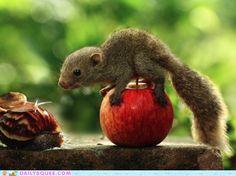 Squirrel baby!