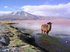 Laguna de agua salada situada en la Reserva Nacional de Fauna Andina Eduardo Avaroa, Potosí, Bolivia.
