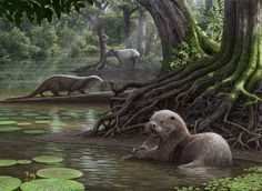 Siamogale melilutra by Mauricio Antón | More than 6 million years ago, a wolf size otter swam through the swampy waters of Miocene China, crushing clams with its powerful teeth.
