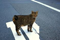 crossing a road, via Flickr.