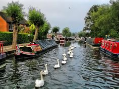 Kennet and Avon Canal, Newbury. For holidays on The Kennet & Avon visit www.abcboathire.com and look for Aldermaston or Hilperton Marina's.