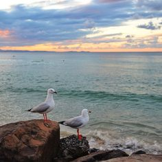 seagulls hanging out by the ocean